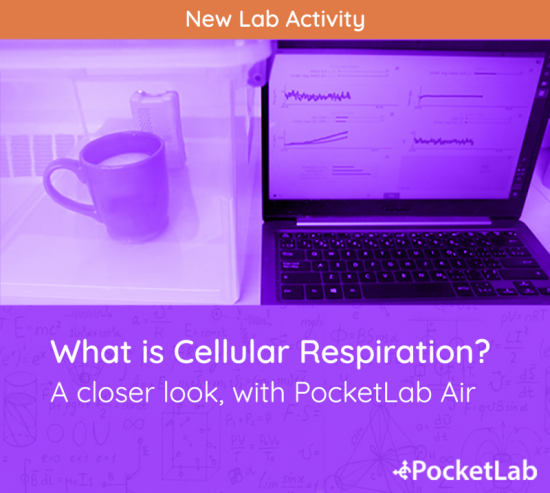 Coffee Cup, PocketLab Air, and a Laptop